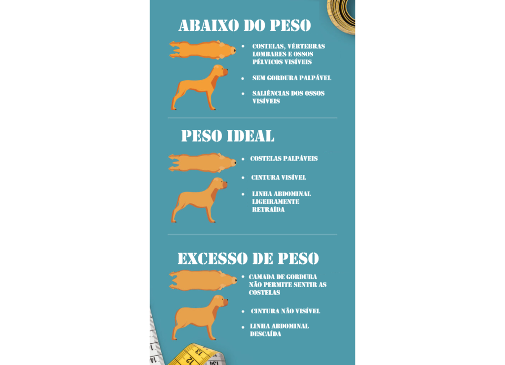 Excesso de peso e obesidade em cães: como identificar