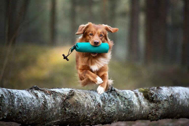 Exercícios físicos para cães para manter o peso ideal