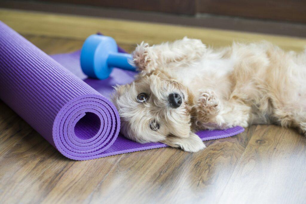 Exercícios físicos para cães: treinar com os donos é uma forma de motivar o cão