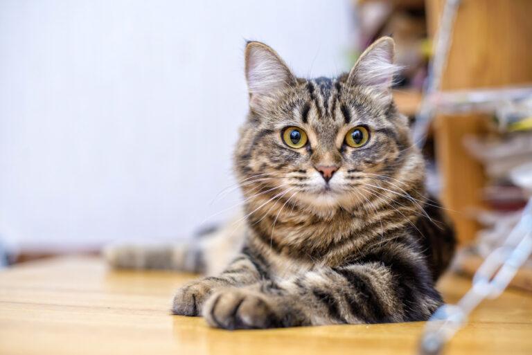 Giardíase felina: esta doença grave pode passar despercebida