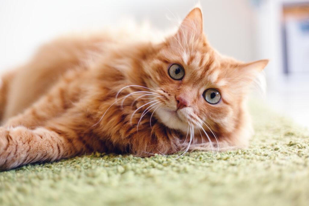 Diarreia nos gatos: são várias as causas da diarreia, incluindo alterações bruscas na alimentação