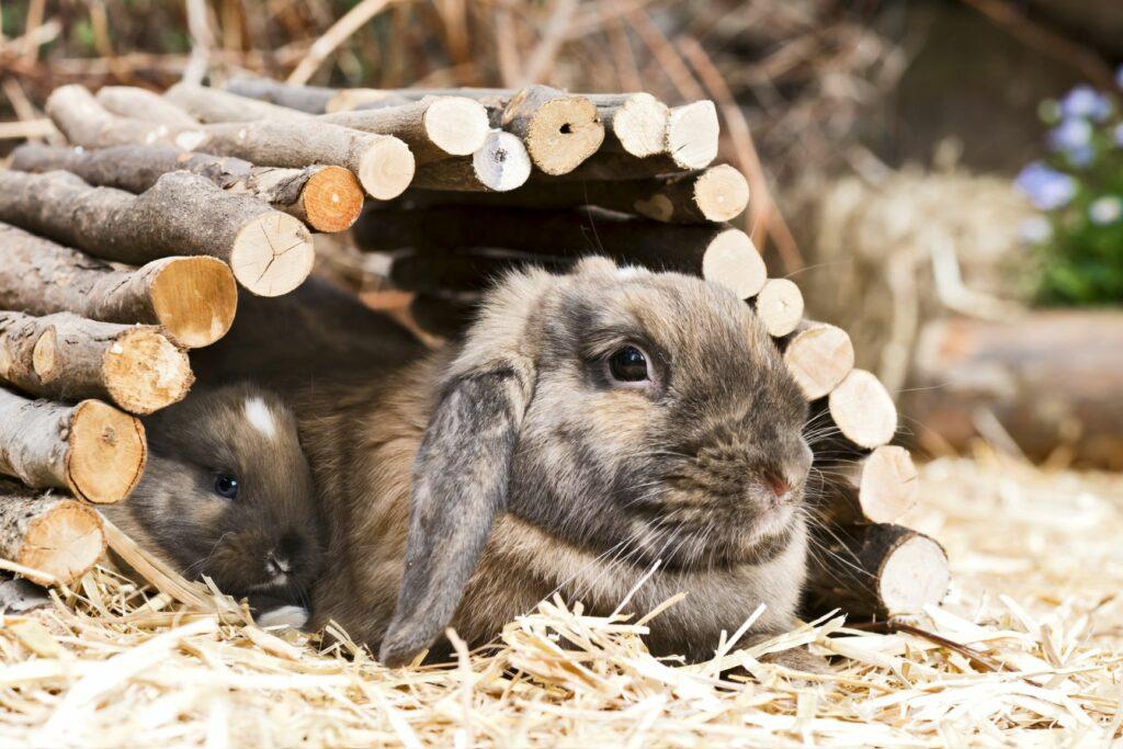 Como entreter um coelho: Os coelhos adoram esconder-se! Dentro de um túnel eles sentem-se completamente protegidos e confortáveis.