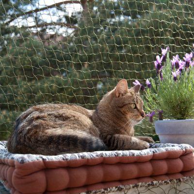 acessórios para gatos: rede de segurança para a varanda ou janelas