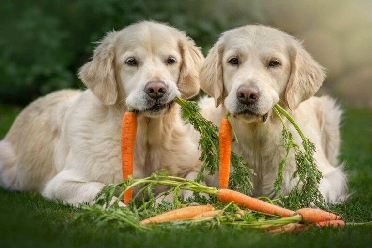 comida vegetariana para cães_1-768×512