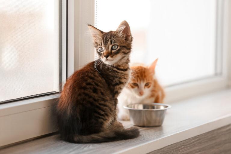 Alimentação adequada para gatos: a qualidade da comida é um dos principais aspetos a ter em conta