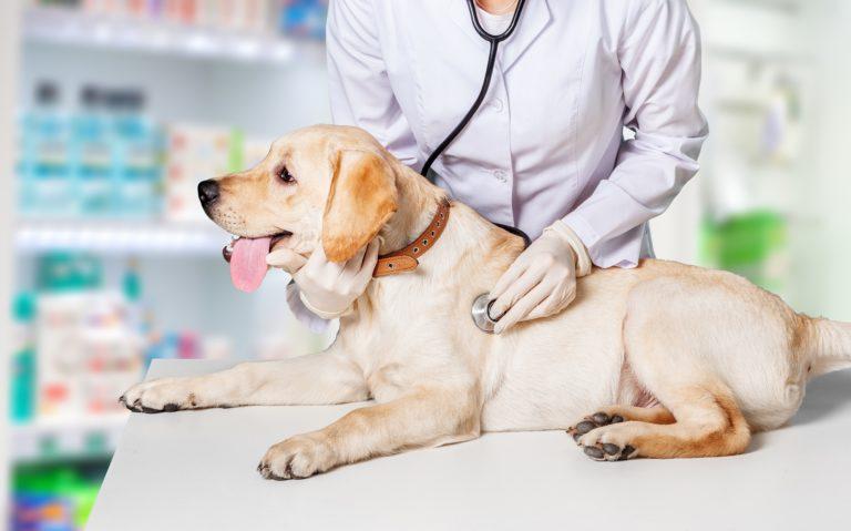 doenças urinárias nos cães