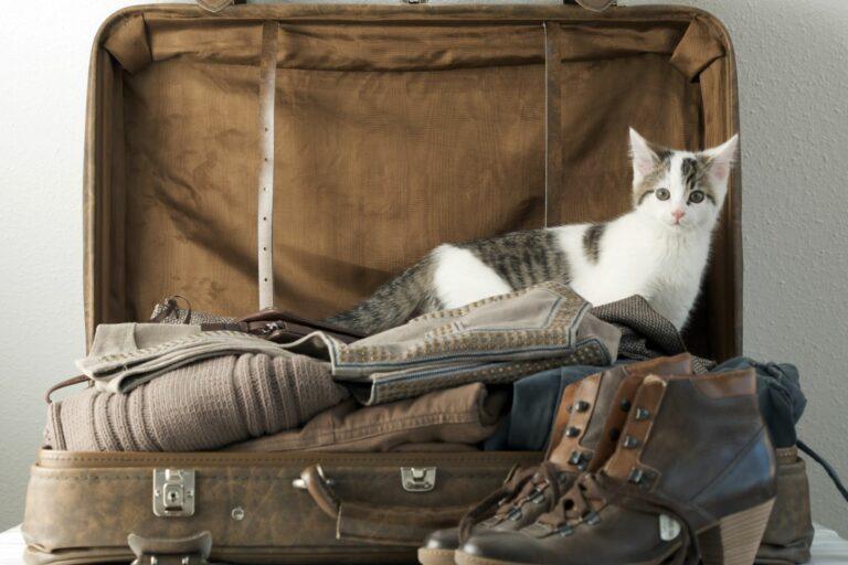 gato dentro de mala de viagem-768×512