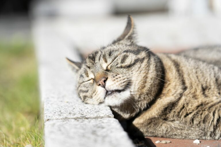 gatos_queimaduras_1
