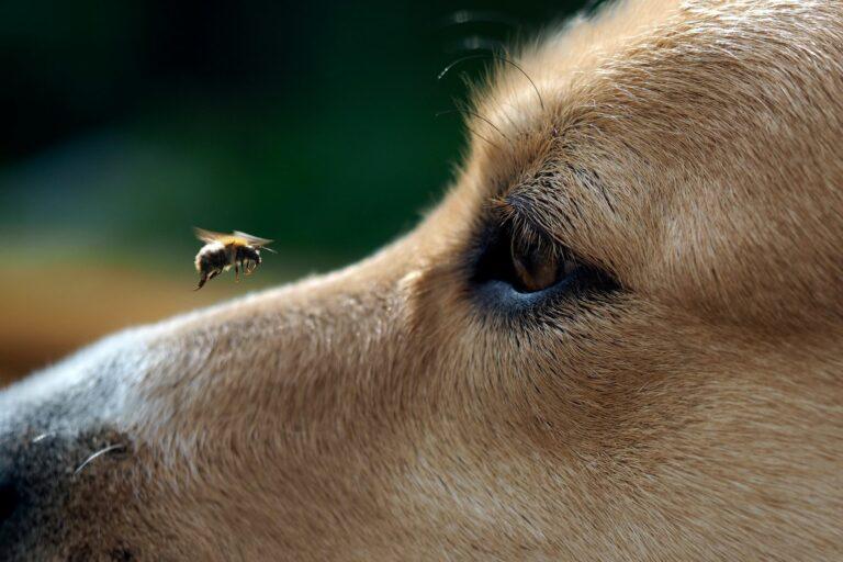 As picadas de abelhas nos cães acontecem quando menos esperamos