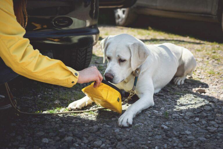 Se o seu cão não bebe água pode ficar desidratado, por isso deve ir com ele ao veterinário