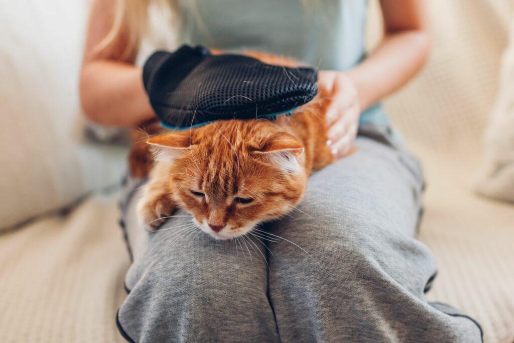 Gato a ser penteado ao colo da dona: ao contrário do que muitas pessoas pensam os pelos não são a causa da alergia a gatos