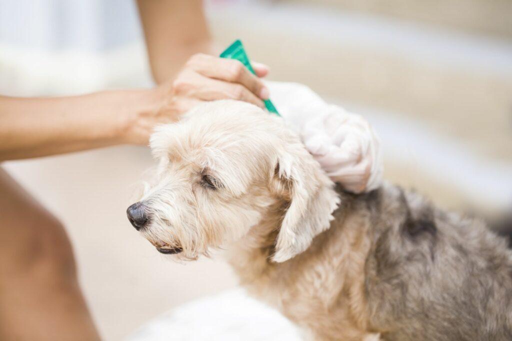 Existem vários antiparasitários que evitam que carraças colonizem os cães