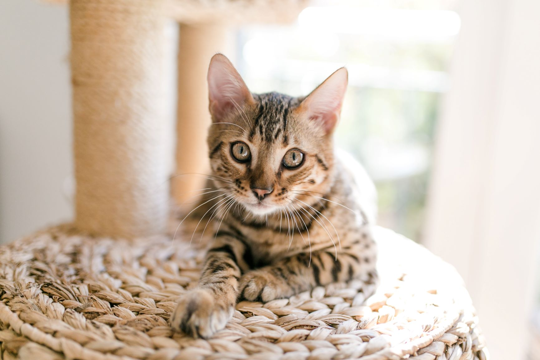 O seu gato arranha o sofá? Ajude-o a cuidar das unhas!
