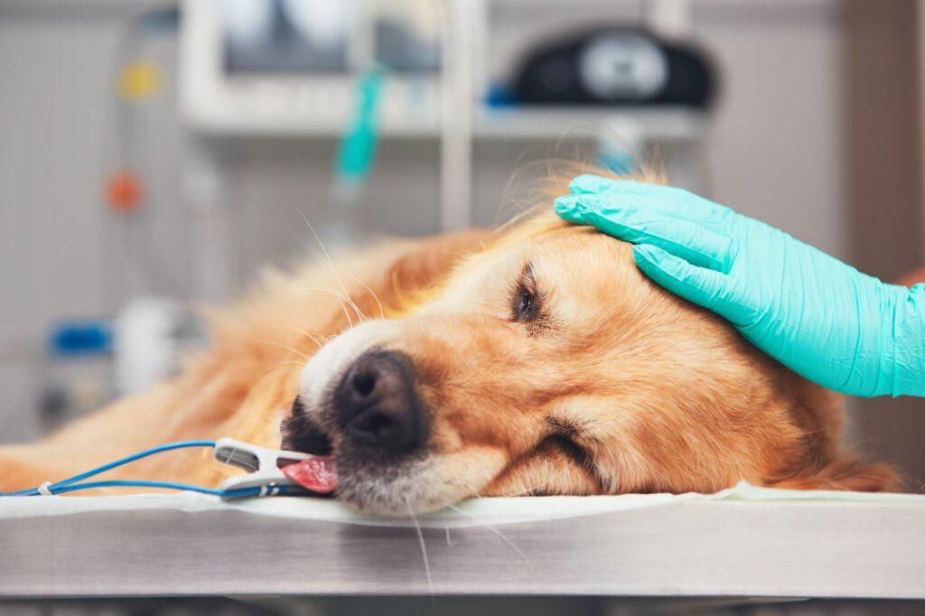 A hiperhidratação em cães é uma situação grave que exige cuidados médicos.