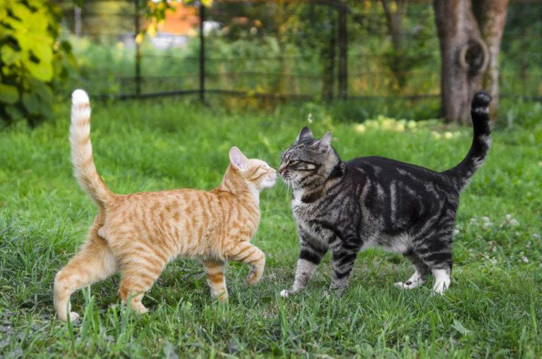 chegada de um novo gato