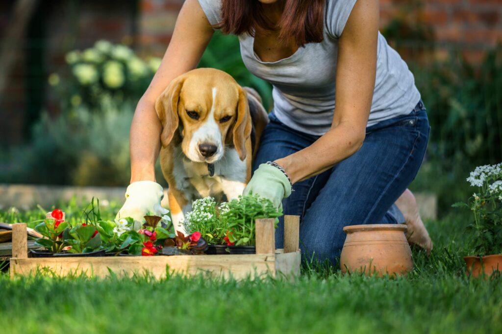Mulher a fazer jardinagem com um cão.