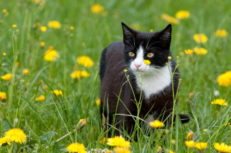 Gato num campo de flores. As carraças estão nas ervas e em pequenos arbustos.