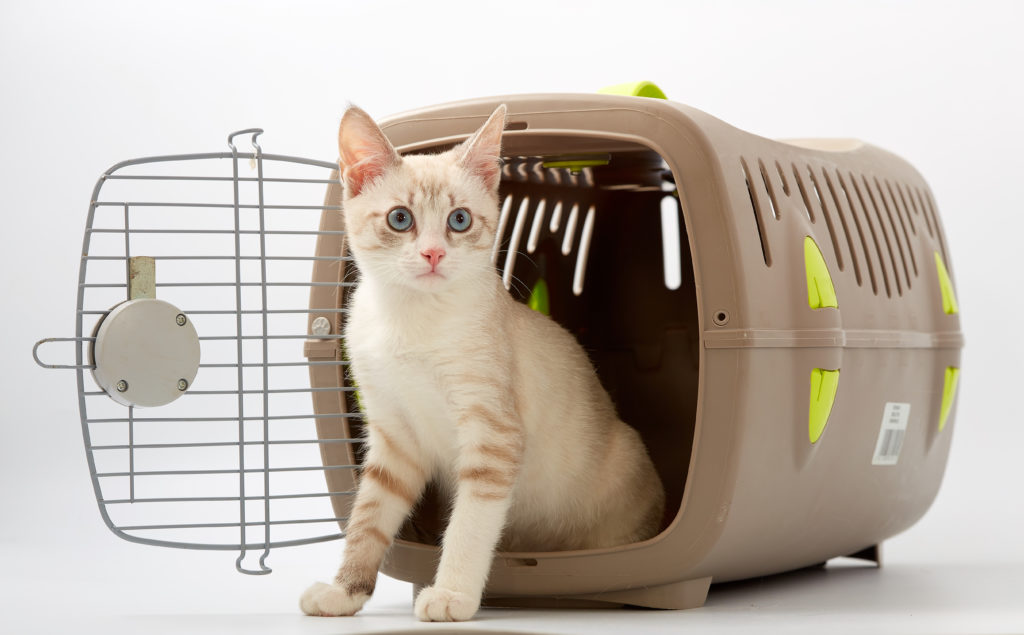 transportadora para gatos perfeita
