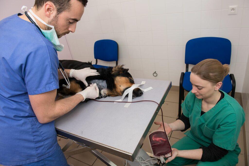 doações de sangue para cães