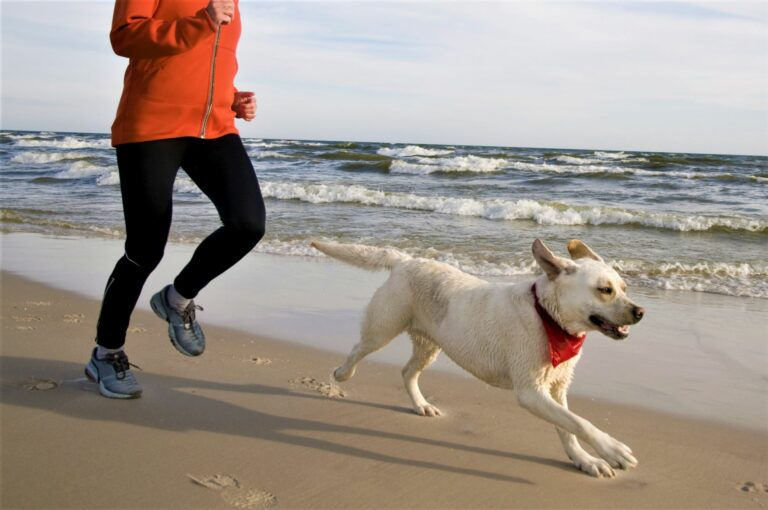 jogging com cães