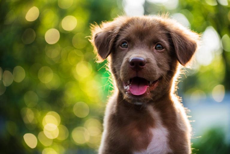 nomes de cães