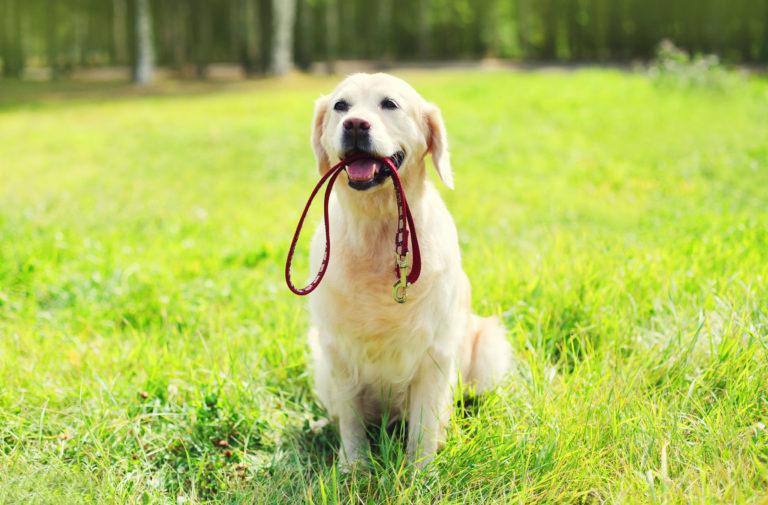 trela para cães