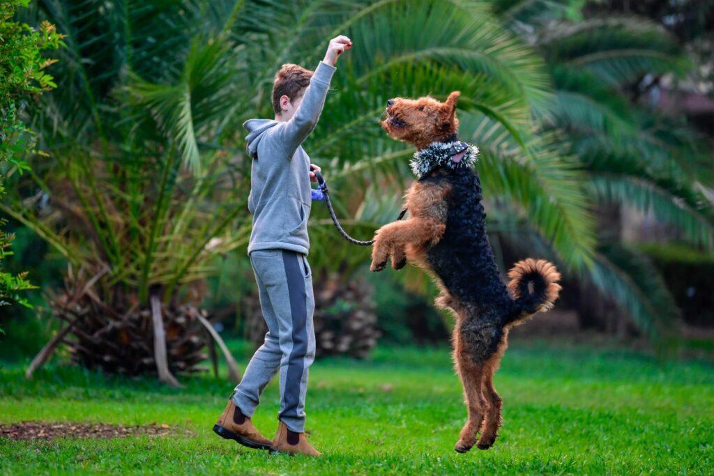 Airedale a brincar com um rapaz num parque