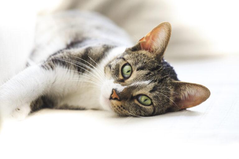 alergias em gatos