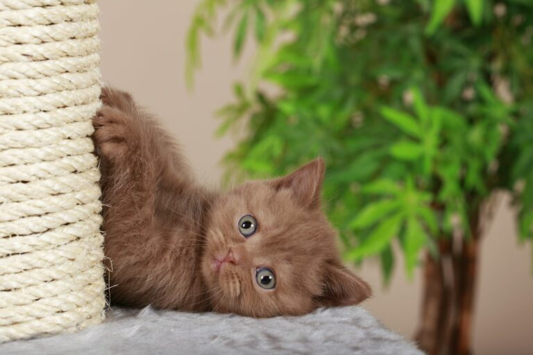 arranhador para gatos DIY