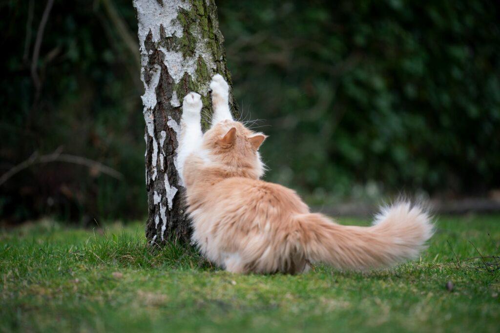 gato a arranhar árvore_arranhdor DIY