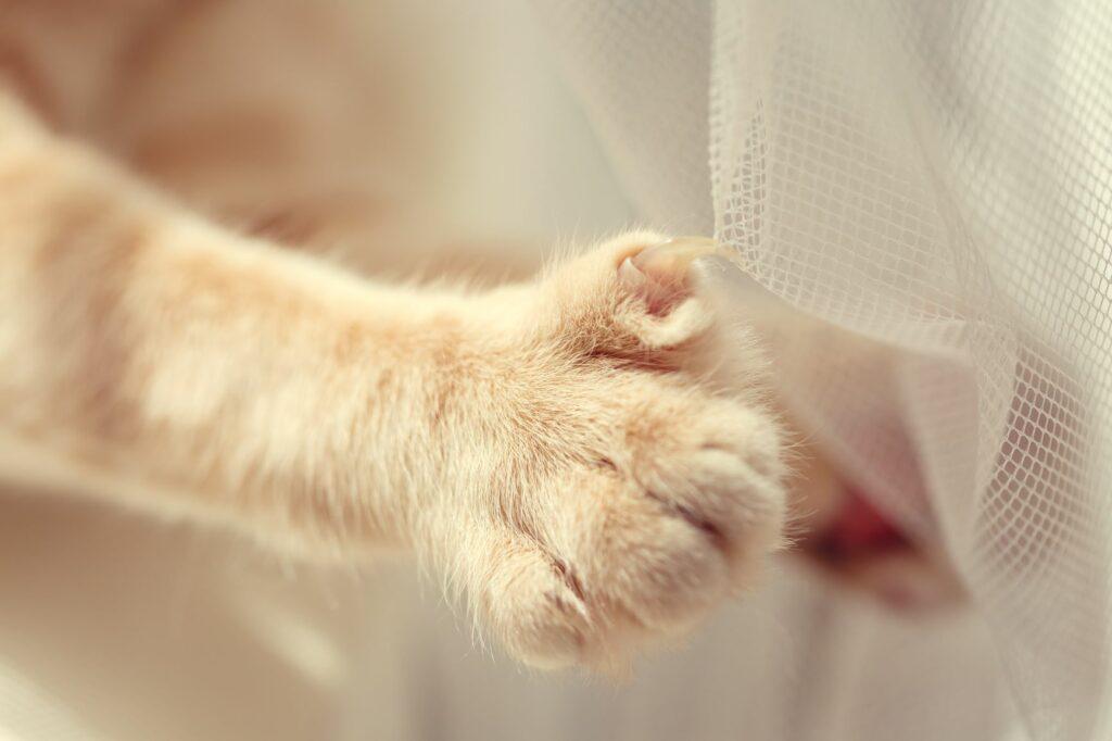 Pata de um gato com a unha presa no cortinado. Cortar as unhas dos gatos é importante para eles não se magoarem
