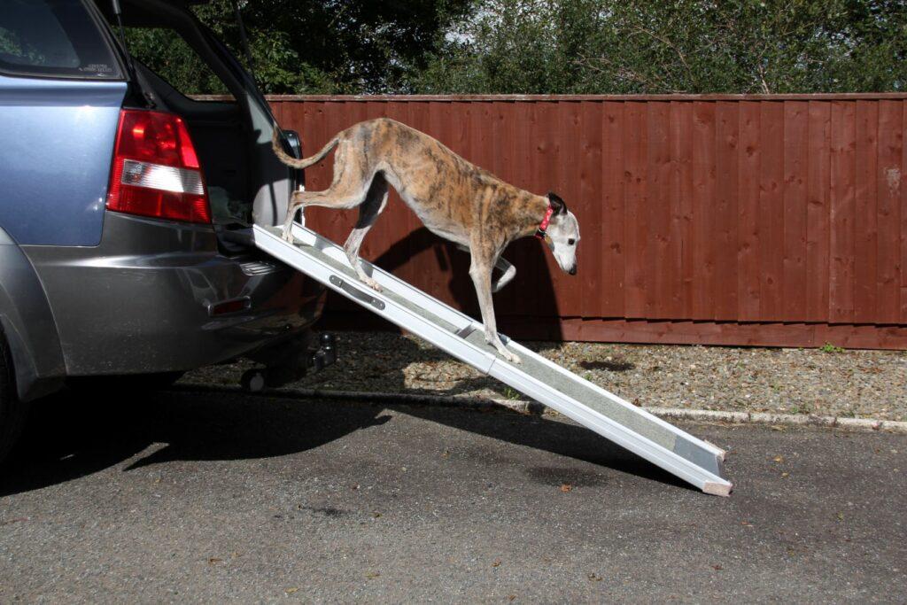 Cão a descer do porta bagagens do carro através de uma rampa. Existem várias formas de aliviar os sintomas de atrite em cães