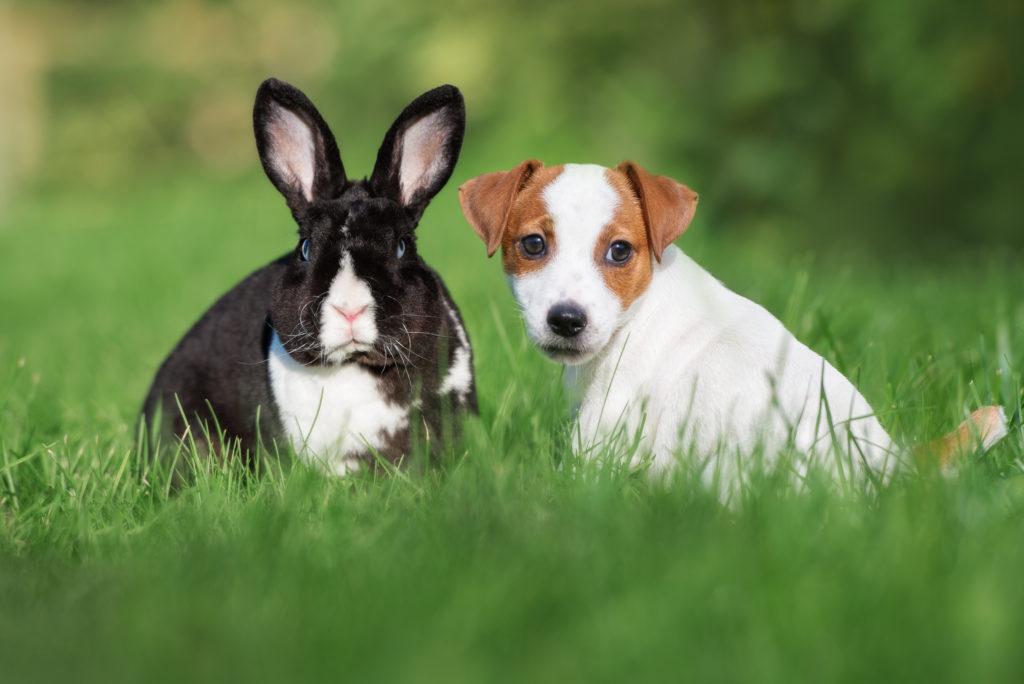 cachorro e coelho juntos na relva