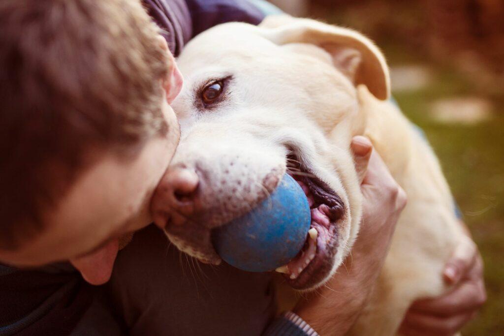 cão com bola azul na boca a ser abraçado pelo dono