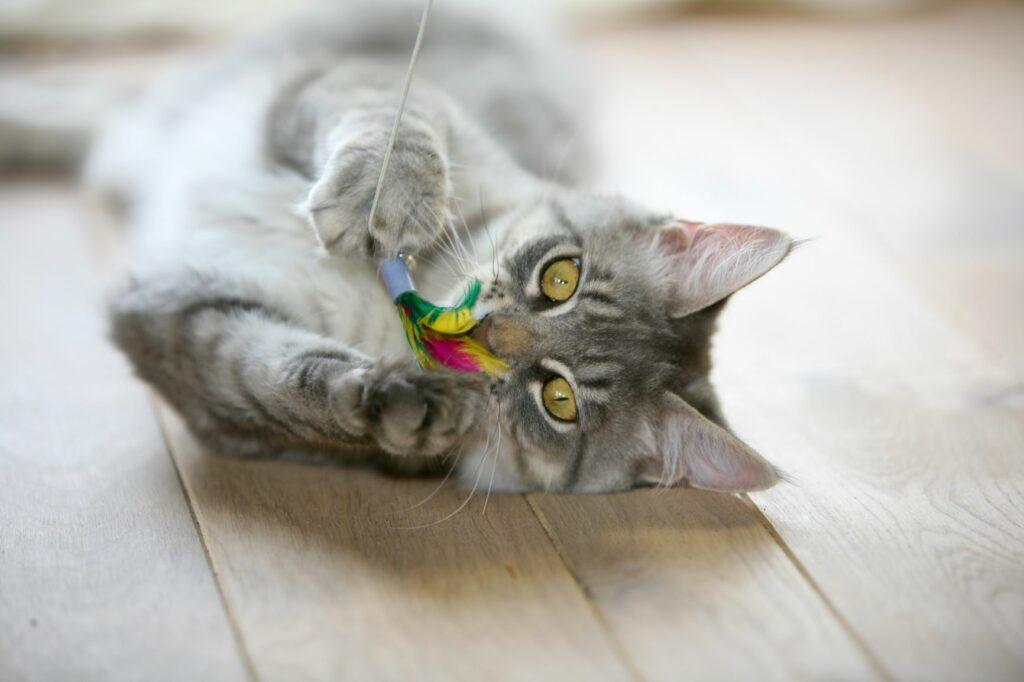 Gato com cana de brincar. Os brinquedos são muito importantes para manter os gatos de apartamento ocupados e felizes.